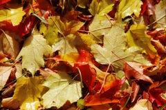 De herfstbladeren Stock Foto