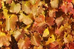 De herfstbladeren Stock Afbeelding