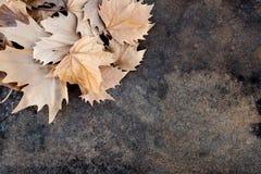 De herfstbladeren aan de hogere kant van een lijst royalty-vrije stock foto's