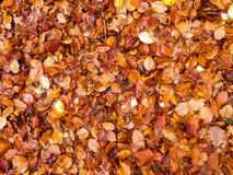 De herfstbladeren als aardachtergrond stock afbeeldingen