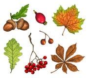 De herfstbladeren, bessen en eikel op witte achtergrond worden geïsoleerd die Royalty-vrije Stock Fotografie