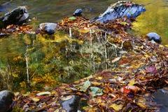 De herfstbladeren, bezinning Royalty-vrije Stock Afbeeldingen