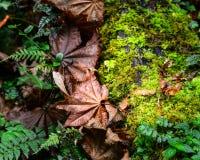 De herfstbladeren bij diep bos stock afbeeldingen