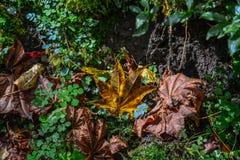 De herfstbladeren bij diep bos stock afbeelding