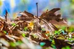 De herfstbladeren, blad Royalty-vrije Stock Afbeelding