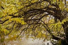De herfstbladeren in de herfstkleuren en lichten Royalty-vrije Stock Afbeelding