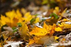 De herfstbladeren in de herfstkleuren en lichten Stock Afbeelding