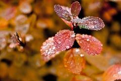 De herfstbladeren in de regen Stock Foto