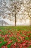 De herfstbladeren dichtbij aan verre super hoge resolutie Royalty-vrije Stock Afbeeldingen