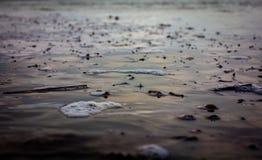 De herfstbladeren die dichtbij de kust drijven Royalty-vrije Stock Afbeelding