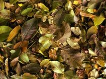 De herfstbladeren die grond behandelen royalty-vrije stock afbeeldingen