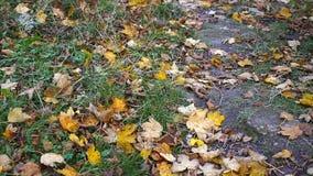 De herfstbladeren die in herfstpark vallen stock videobeelden