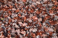 De herfstbladeren die van de boom vallen achtergronden Stock Afbeelding