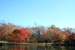 De herfstbladeren door meer in Kiyosato-hoogland stock afbeelding