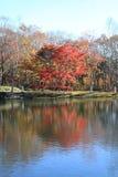 De herfstbladeren door meer in Kiyosato-hoogland royalty-vrije stock afbeeldingen