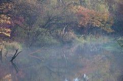 De herfstbladeren in een bosmeer/een bezinning/een aard van het Verre Oosten van Rusland Stock Afbeelding