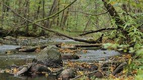 De herfstbladeren in een rivier worden overgoten die stock footage