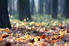 De herfstbladeren in een zonnig bos Stock Afbeeldingen