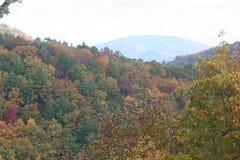De herfstbladeren en bomen op het meer Stock Foto