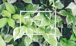 De herfstbladeren en bougainvilleaAnd zijn er groen gevoeld verfrist stock afbeelding