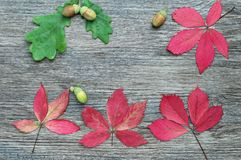 De herfstbladeren en eikels op een donkere houten oppervlakte, hoogste mening Stock Fotografie