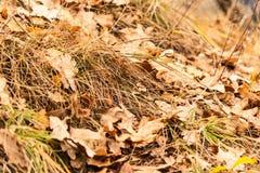 De herfstbladeren en gras royalty-vrije stock fotografie