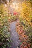 De herfstbladeren en grassen langs aardsleep bij Vaseux-Meer royalty-vrije stock afbeeldingen