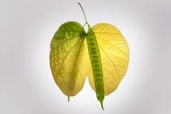 De herfstbladeren en groen en geel liefdesymbool stock afbeelding