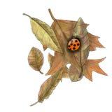 De herfstbladeren en lieveheersbeestje Royalty-vrije Stock Afbeelding