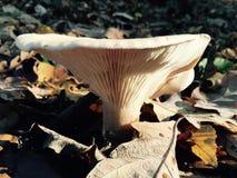 De herfstbladeren en paddestoel op gebieden Stock Foto