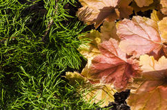 De herfstbladeren en pijnboomnaalden Royalty-vrije Stock Afbeelding