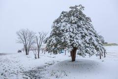 De herfstbladeren en sneeuw behandelde boom Stock Afbeeldingen
