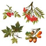 De herfstbladeren en vruchten van de inzameling Stock Foto