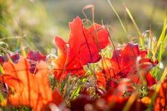 De herfstbladeren in gras stock foto's