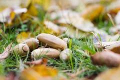 De herfstbladeren, gras, grond en eikels Stock Afbeelding