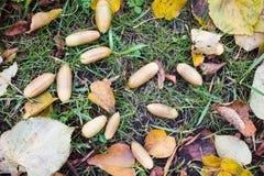 De herfstbladeren, gras, grond en eikels Royalty-vrije Stock Foto's