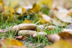 De herfstbladeren, gras, grond en eikels Royalty-vrije Stock Afbeeldingen