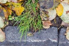 De herfstbladeren, gras, grond en eikels Stock Foto's