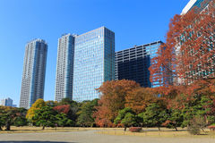 De herfstbladeren in Hamarikyu-Tuinen, Tokyo stock afbeeldingen