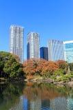 De herfstbladeren in Hamarikyu-Tuinen, Tokyo stock afbeelding