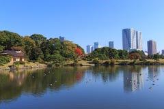 De herfstbladeren in Hamarikyu-Tuinen, Tokyo royalty-vrije stock afbeeldingen
