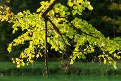 De herfstbladeren in het bos stock foto