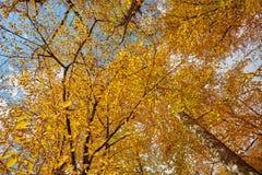 De herfstbladeren in het bos Stock Fotografie
