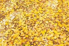 De herfstbladeren in het bos op een zonnige dag royalty-vrije stock afbeelding