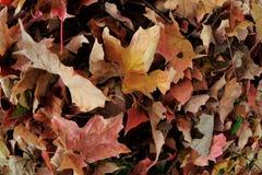 De herfstbladeren in het gras Stock Afbeelding