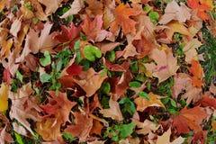 De herfstbladeren in het gras Stock Afbeeldingen