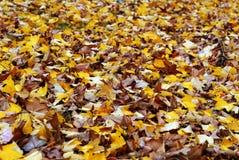 De herfstbladeren in het hout Royalty-vrije Stock Foto
