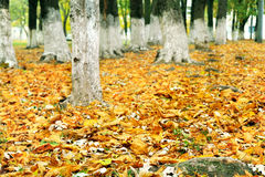 De herfstbladeren in het park Stock Afbeelding