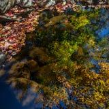 De herfstbladeren in het water worden weerspiegeld dat stock foto