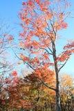 De herfstbladeren in Kiyosato-hoogland, Yamanashi royalty-vrije stock afbeeldingen